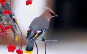 Птицы тату